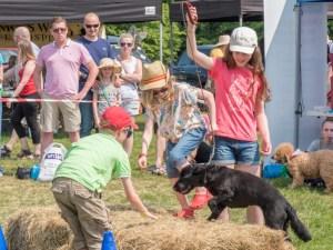 Dog Show Competitors