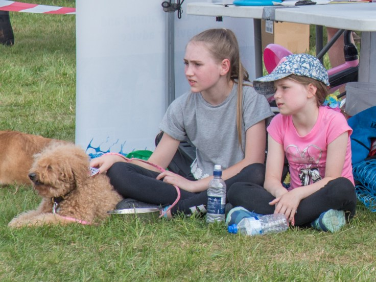 Dog Show Competitors Watching Rivals