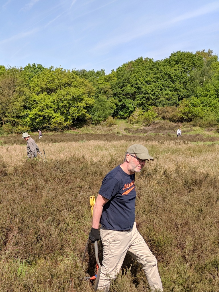 Volunteers searching for gorse