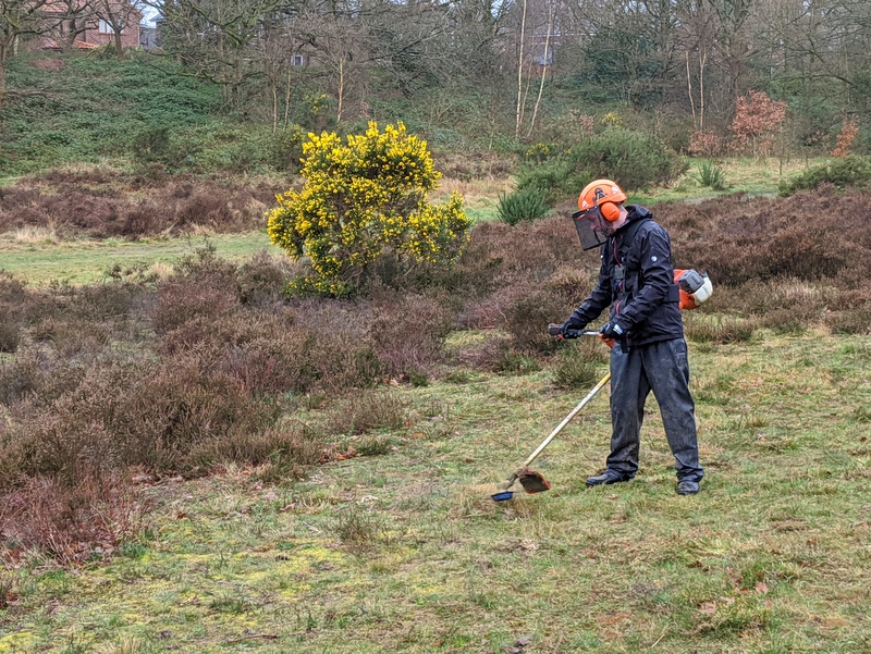Brush Cutting Gorse