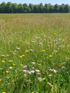 Long Grass and Flowers