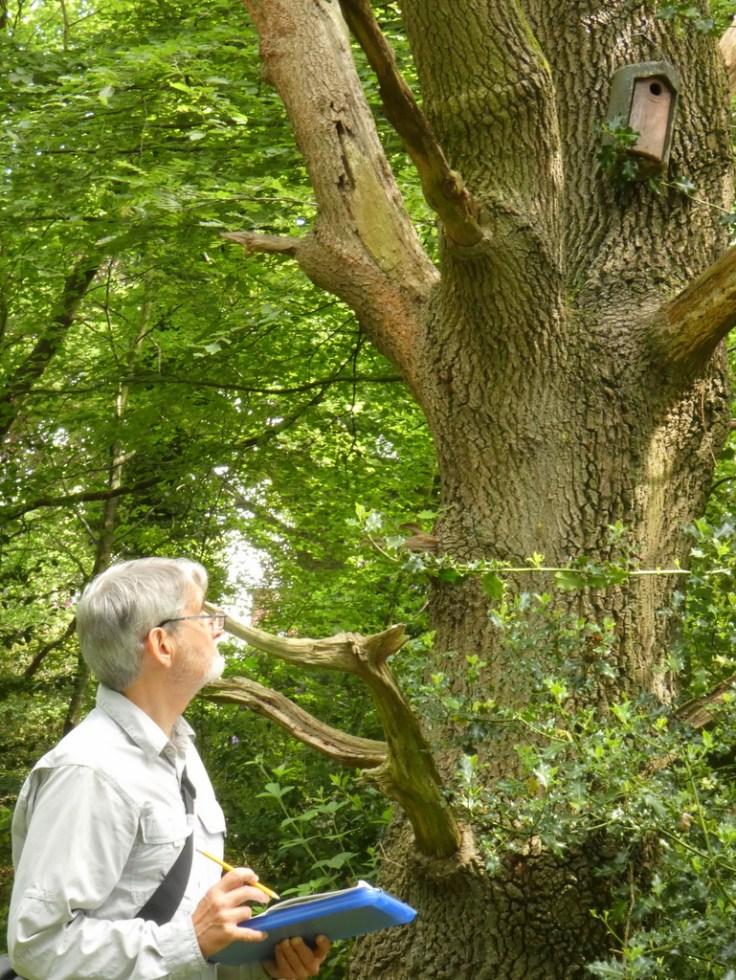 Surveyor Checking Nest Box