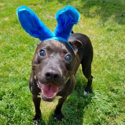 joey-bunny
