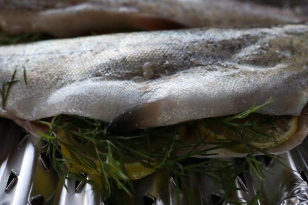 Fishmaster-8