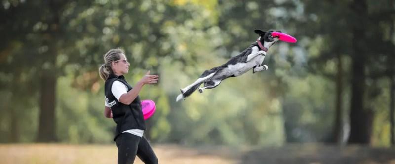 frisbeescape scegliere il disco per il cane