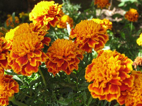 Blumen Im September Einpflanzen