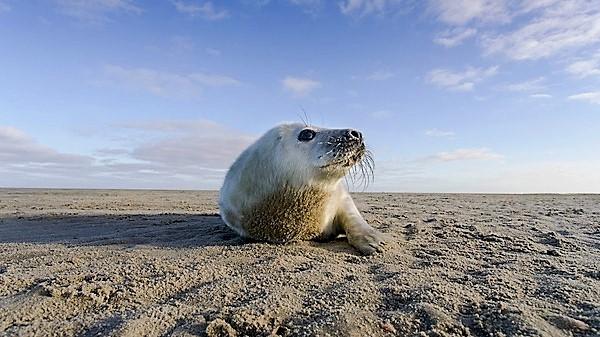 zeehond
