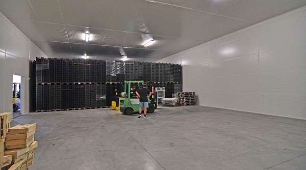 case study vegetable storage