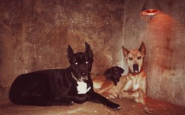 Kascha, Senta und Bonny