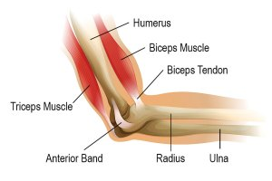 Elbow and Wrist Injuries and Conditions