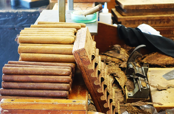 Photo of finished cigars on the left and freshly rolled, unfinished cigars on the right.