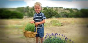 Little Harvest Helper