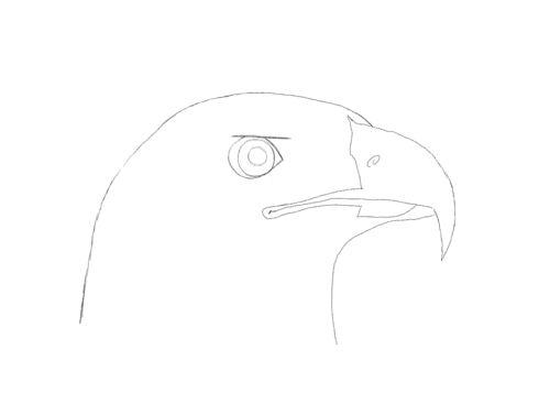 Easy Eagle Head Drawings