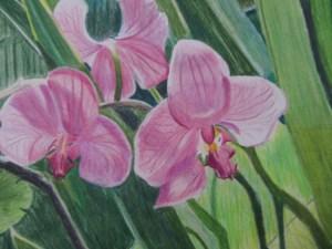 Orchids Colored Pencil