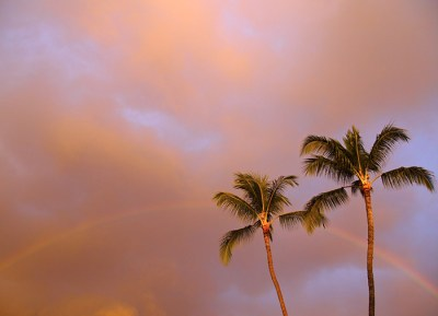 Palm Trees and a Rainbow