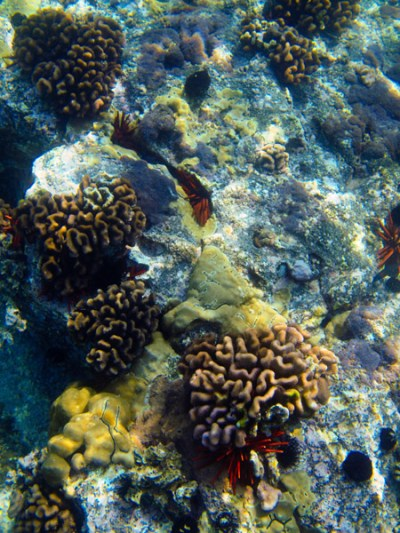 Honokohau Harbor Coral
