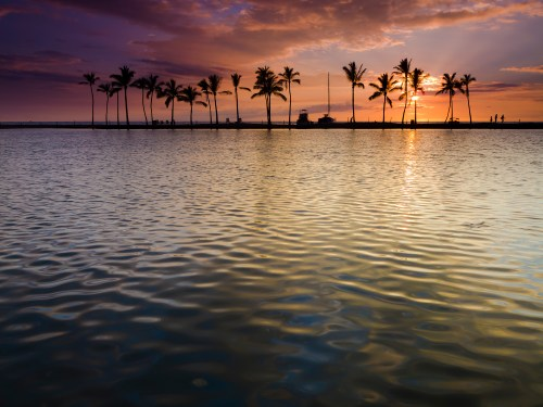 Anaehoomalu palm trees at sunset. Waikoloa, Hawaii