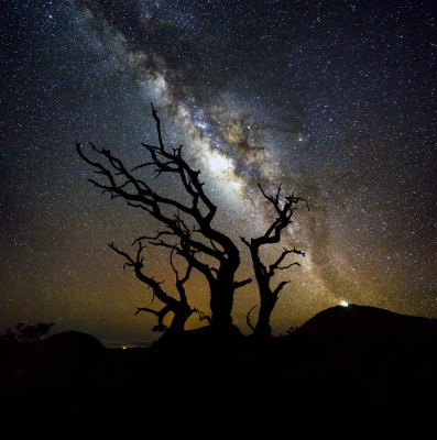 Photograph from Mauna Kea with the silhouette of an old tree in front of a bright milky way.