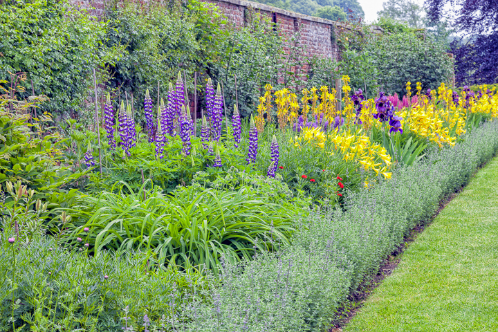 Yellow and purple garden color scheme with purple lupines and yellow day lilies ©yolfran - stock.adobe.com