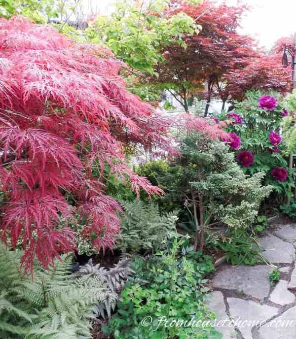 shade loving shrubs 10 beautiful
