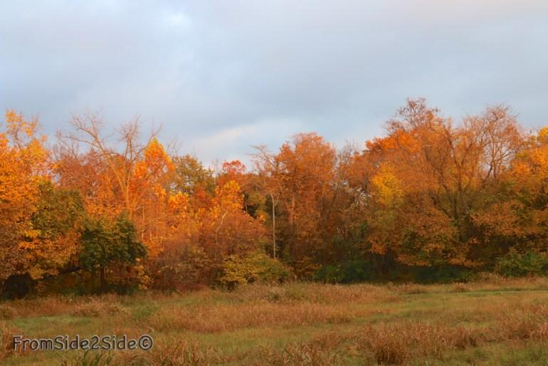 automne_2014 5 (1)