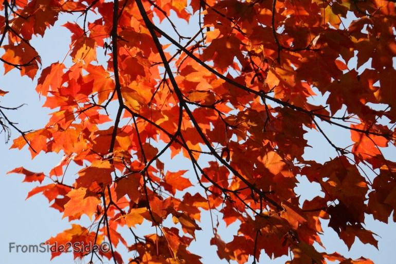 automne_2014 9