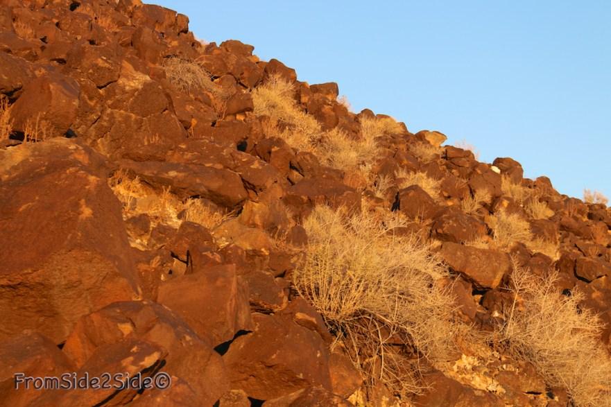 Petroglyph National Monument 22