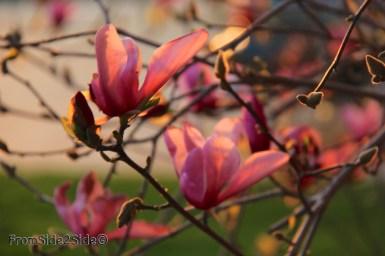 printemps 3 (1)