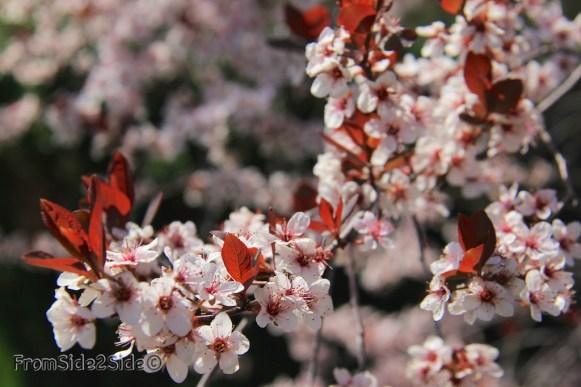 printemps 7 (1)