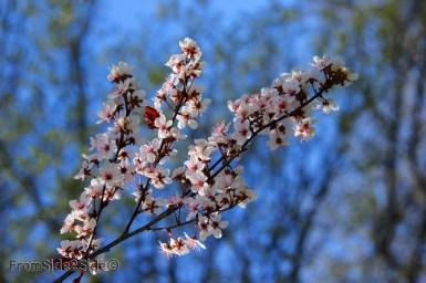 printemps 8 (1)