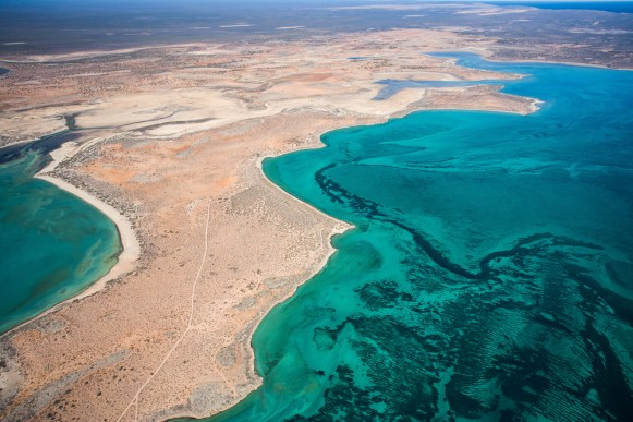 Shark Bay - Shutterstock
