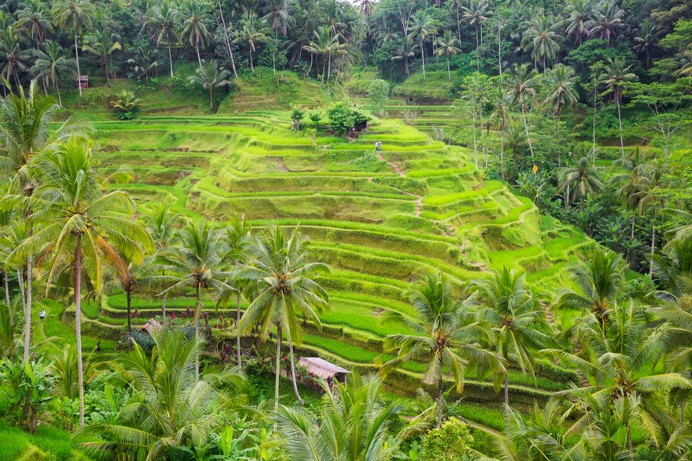 Bali et ses rizières - Shutterstock