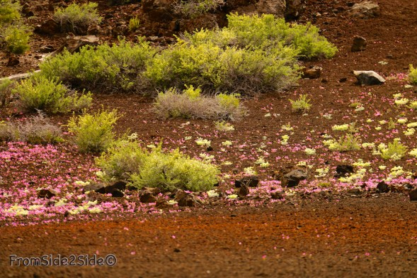 craters of the moon 6