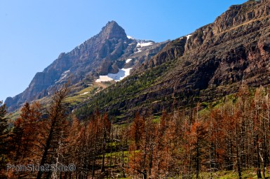 Glacier National Park 6