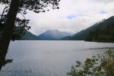 olympic-rainforest-27