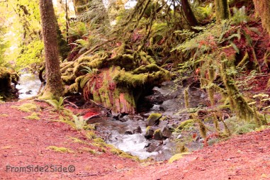 olympic-rainforest-28