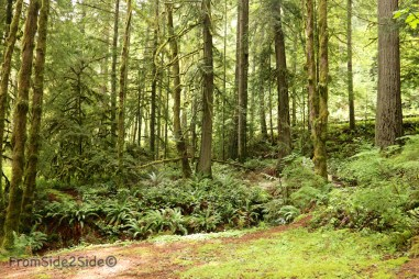 olympic-rainforest-29