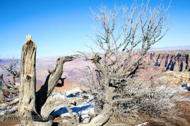 Grand Canyon 5 (1)