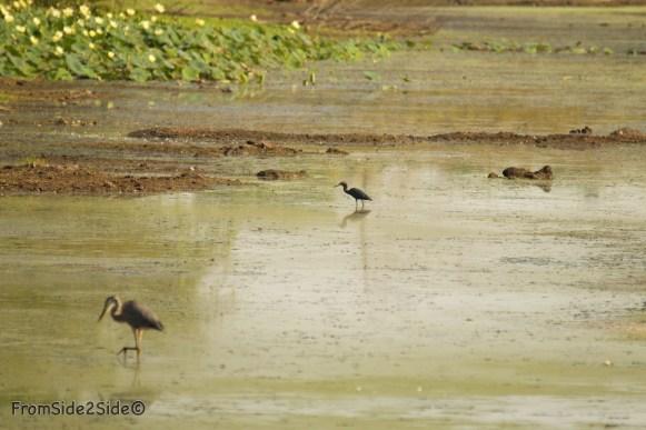 baker_wetlands 13
