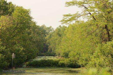 baker_wetlands 26