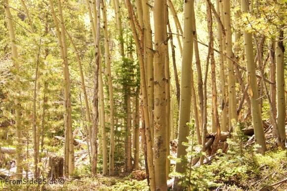 Rocky-National-Park 6