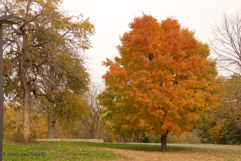 automne 1 (2)