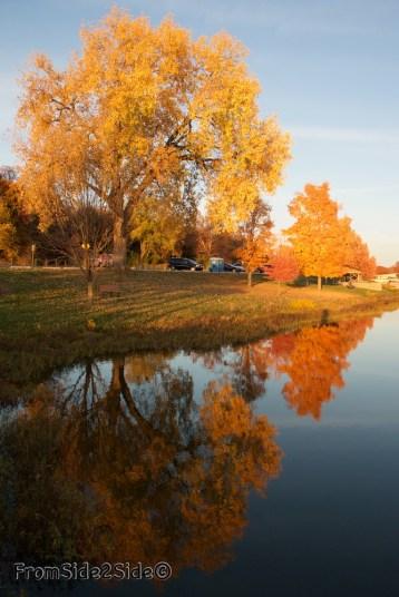 automne 11 (1)