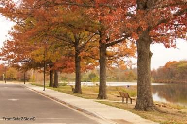 automne 4 (1)