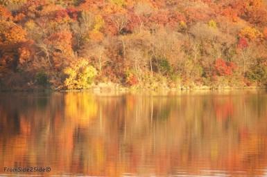automne 4