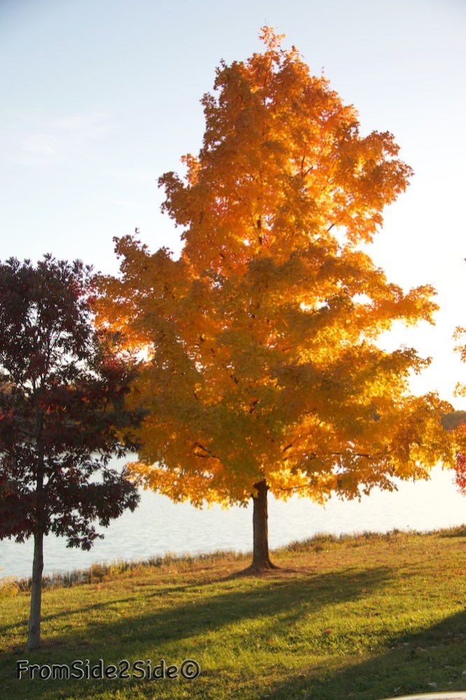 automne-SM-park 1
