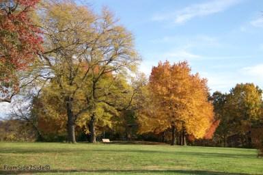 automne-SM-park 6