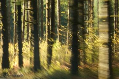 Oregon-coast 2