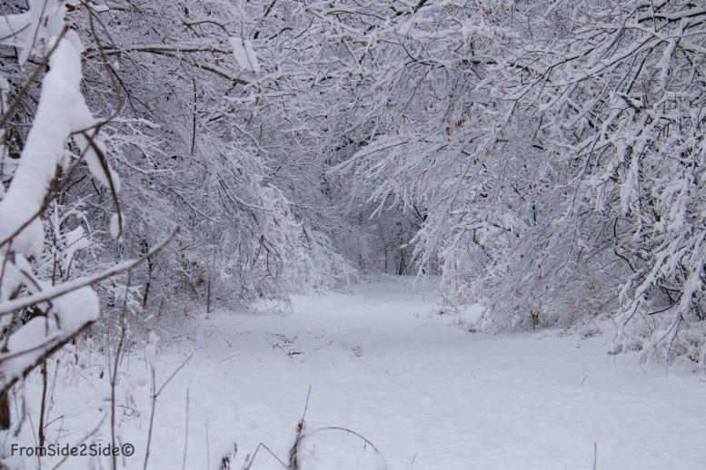 neige-jan-19 18
