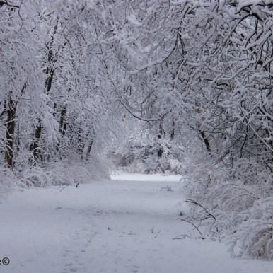neige-jan-19 21